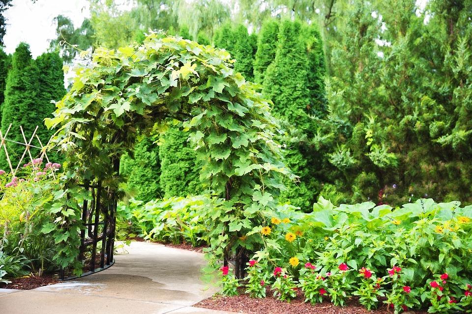 Embellissez votre jardin avec les arches et portiques pour plantes grimpantes
