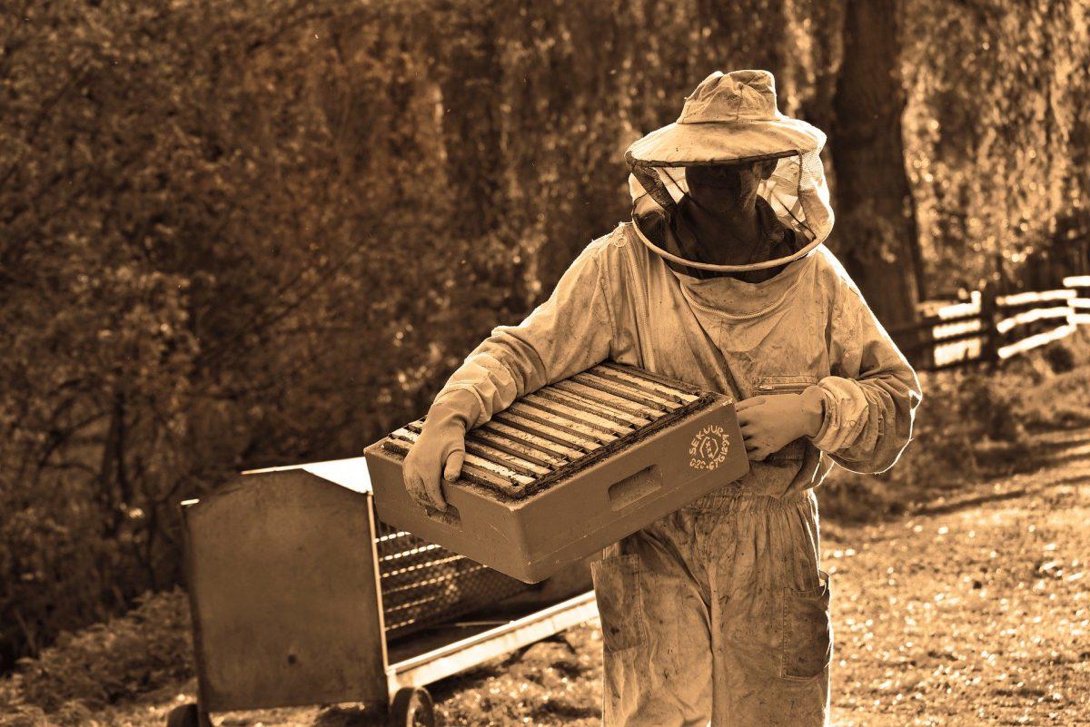 Devenir apiculteur : combien ça coûte ?
